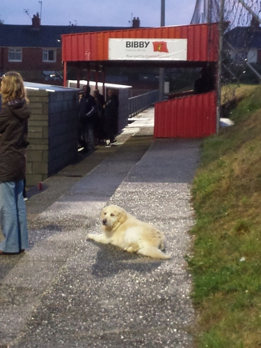 One for you 'Non-League Dogs'!