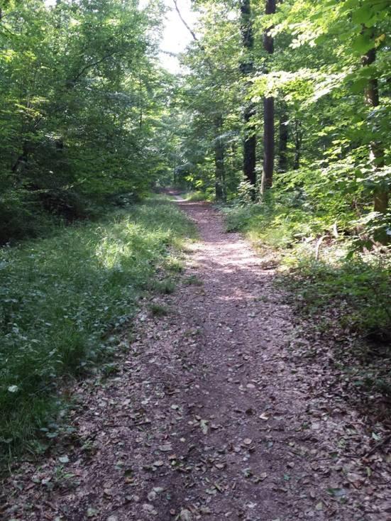 Trekking through the woods.